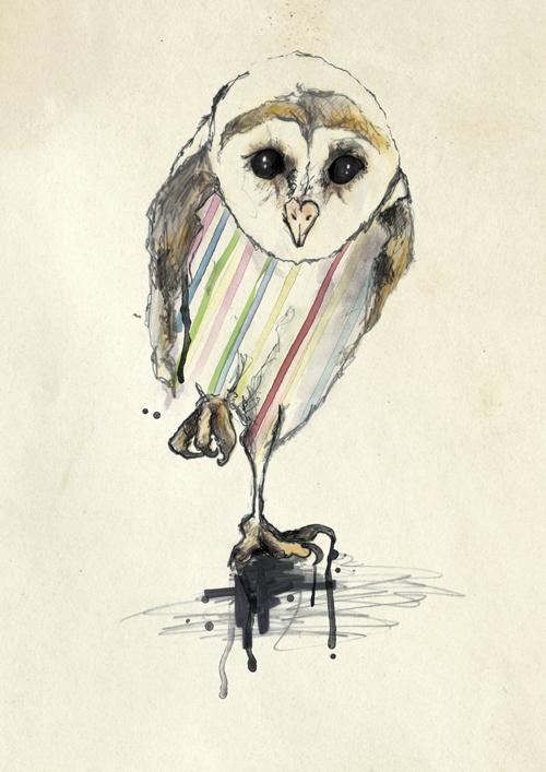 53_owl